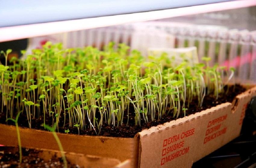 germinate seeds indoors